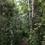Nationalpark Andasibe Mantadia (Analamazoatra)