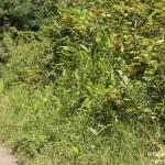 South-east Andasibe Mantadia