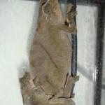 Rhinodigitum nchisiensis (mating)